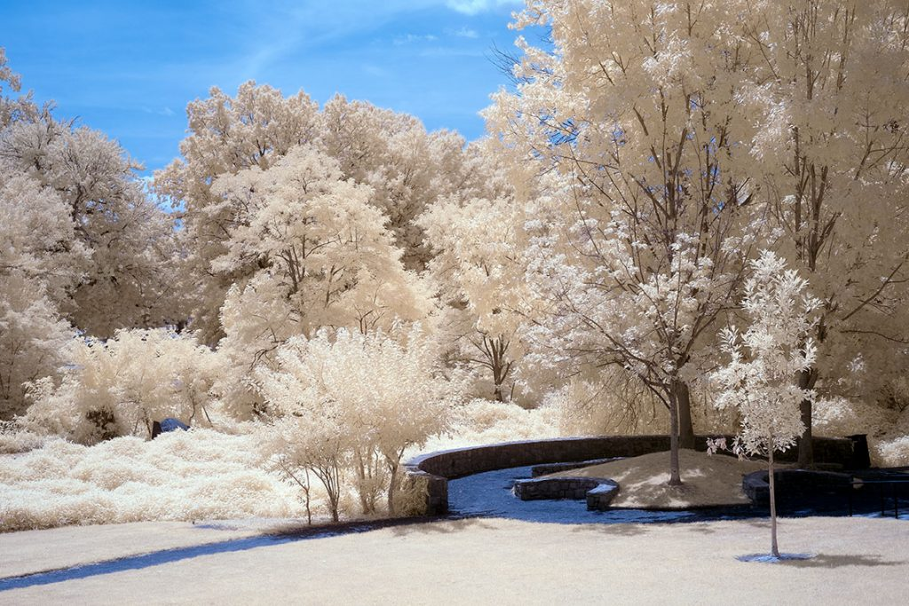 Infrared Photography - False Color